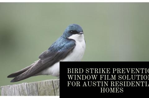 Bird Strike Prevention Window Film Solutions for Austin Residential Homes