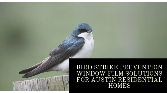Bird Strike Prevention Window Film Solutions for Austin Residential Homes