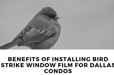 Benefits of Installing Bird Strike Window Film for Dallas Condos