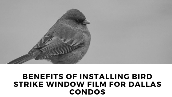Benefits of Installing Bird Strike Window Film for Dallas Condos