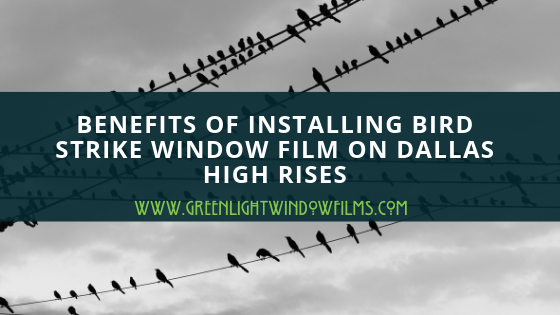Benefits of Installing Bird Strike Window Film On Dallas High Rises