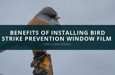 Benefits of Installing Bird Strike Prevention Window Film for Austin Offices