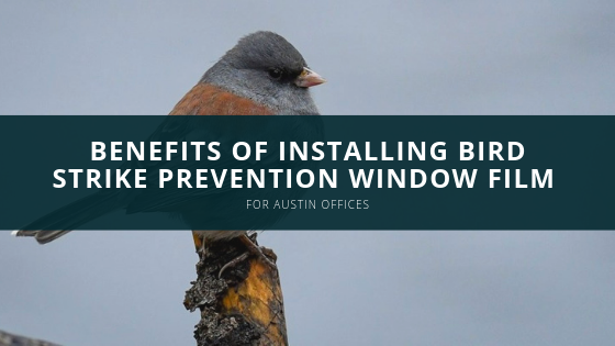 Benefits of Installing Bird Strike Prevention Window Film for Austin Offices