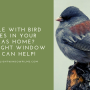 Trouble with Bird Strikes in your Dallas Home? GreenLight Window Film Can Help!