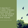 Help Protect Against Bird Strikes this Summer by Installing Window Film in your Fort Worth Home