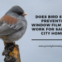 Does Bird Strike Prevention Window Film Really Work for Salt Lake City Homes?