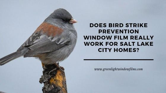 bird strike prevention window film salt lake city