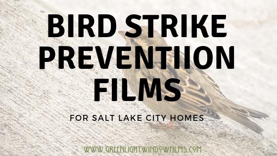 Bird Strike Prevention Window Film Solutions for Salt Lake City Homes