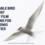 Affordable Bird Deterrent Window Film Solutions for San Antonio Properties