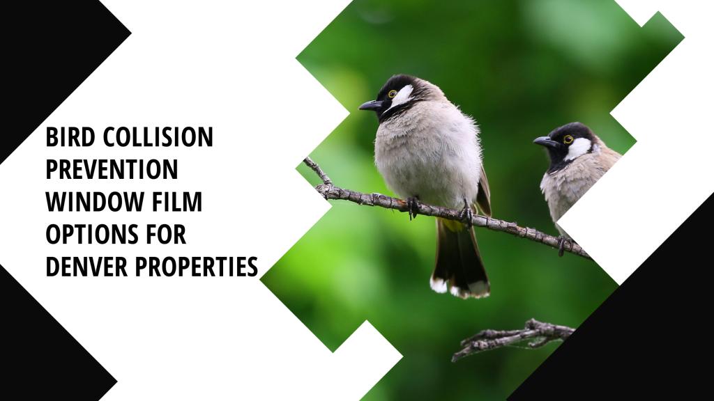 bird collision prevention window film denver