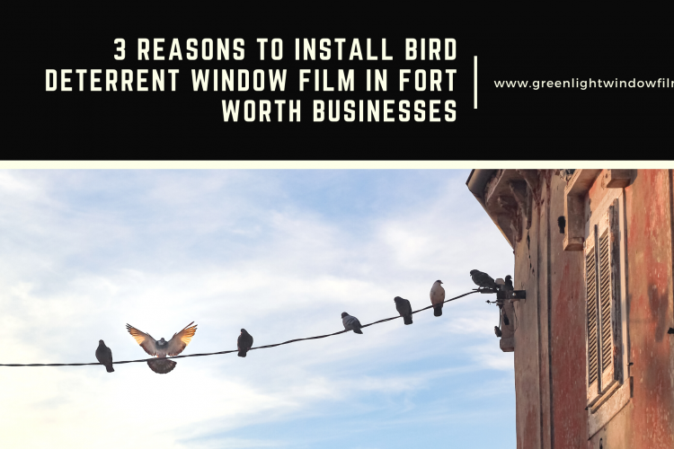 3 Reasons to Install Bird Deterrent Window Film in Fort Worth Businesses
