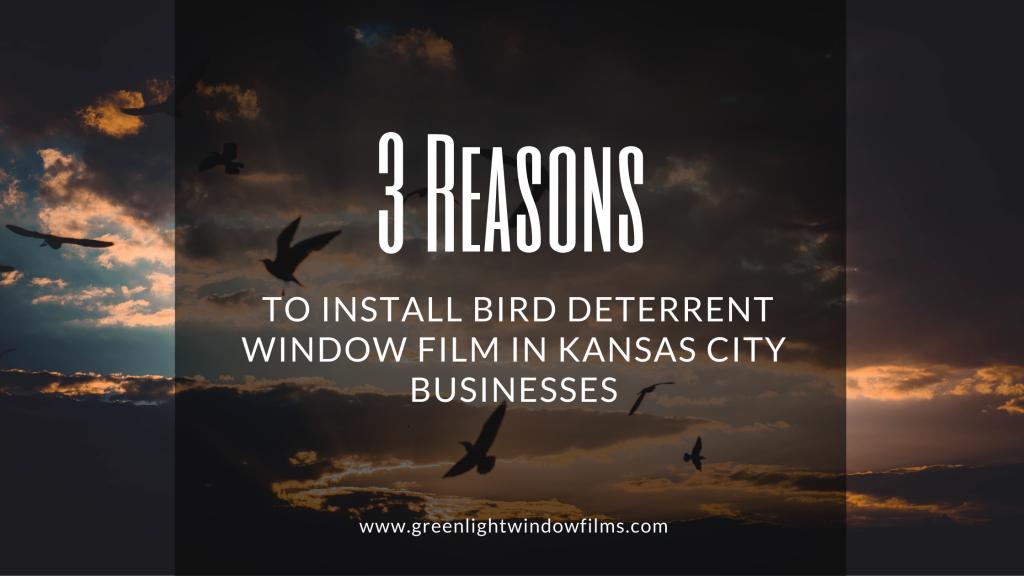 bird deterrent window film kansas city businesses