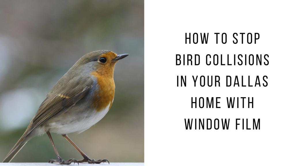 stop bird collisions dallas window film