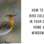 How to Stop Bird Collisions in Your Dallas Home with Window Film
