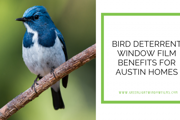 Bird Deterrent Window Film Benefits for Austin Homes