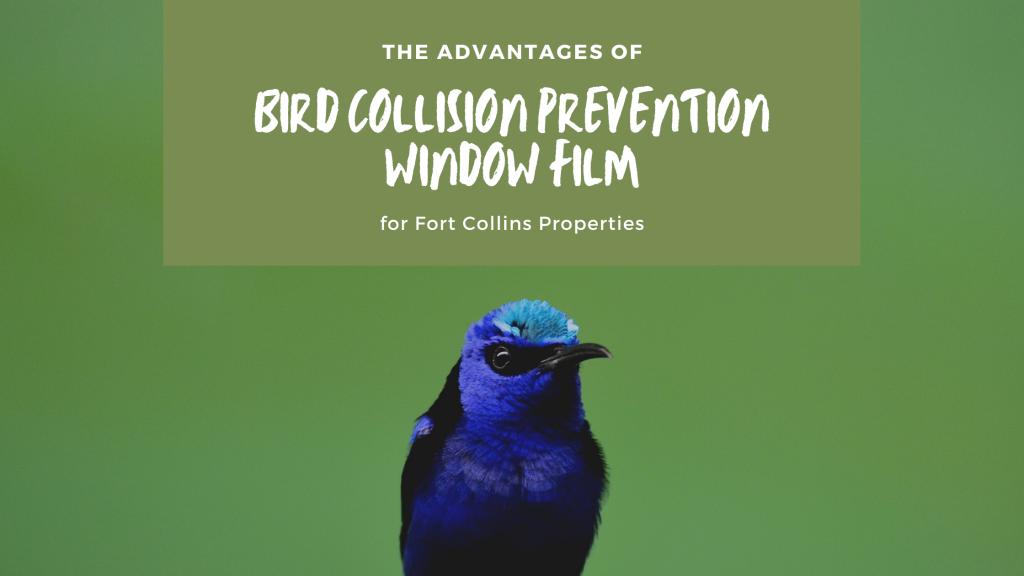 bird collision prevention window film fort collins