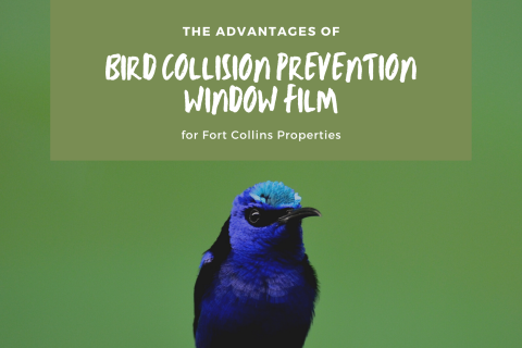 The Advantages of Bird Collision Prevention Window Film for Fort Collins Properties