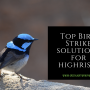 Top Bird Strike Solutions For Austin High Rises