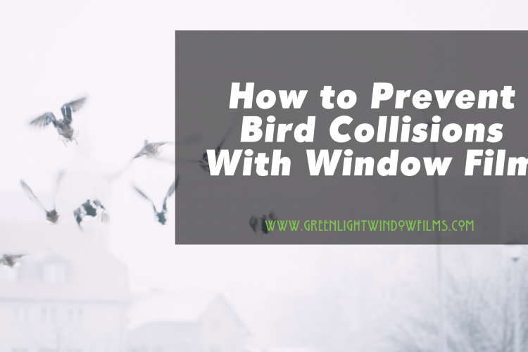 How to Prevent Bird Collisions With Window Film In Kansas City
