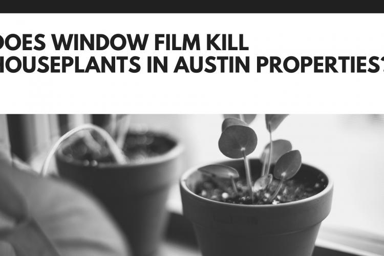 Does Window Film Kill Houseplants In Austin Properties?